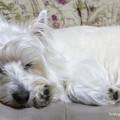 Photos: お眠の時間