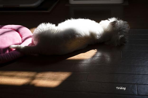 日なたぼっこ