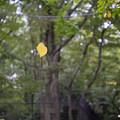 Photos: 宙に浮く葉