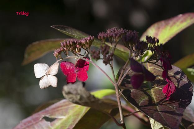 Photos: 白と紅