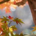Photos: 進む紅葉