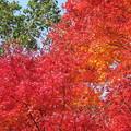 写真: 赤橙黄緑青