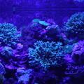 Photos: 青藍紫