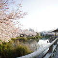Photos: 須磨寺公園の桜