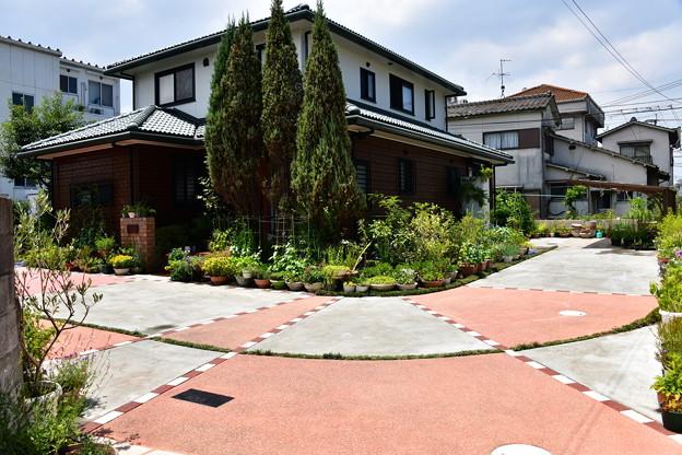 2018年夏の庭1