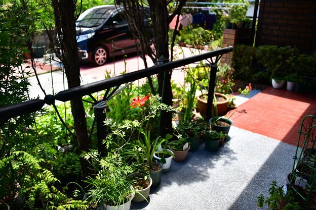 写真: 2018年夏の庭4