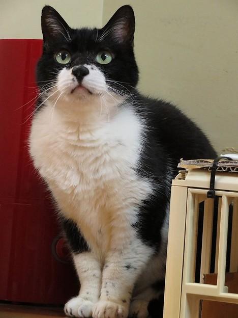 写真: ビビ「猫のいない生活が希望なのよ」