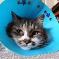 写真: ポム「オレの猫生、こんなもんなのか?」