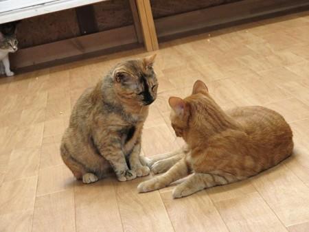 花梨「あんた、それでもオトコなの!?」 シモン「ん~、ボクってオトコノコなのかなぁ?」
