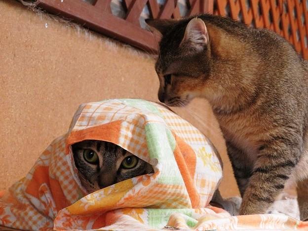 写真: おおきみ「むふふ♪誰にも気付かれていないぞ」 アビー「にゃんだ?これ」