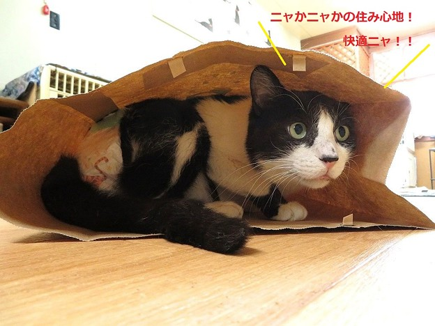 紙袋で遊ぼう!