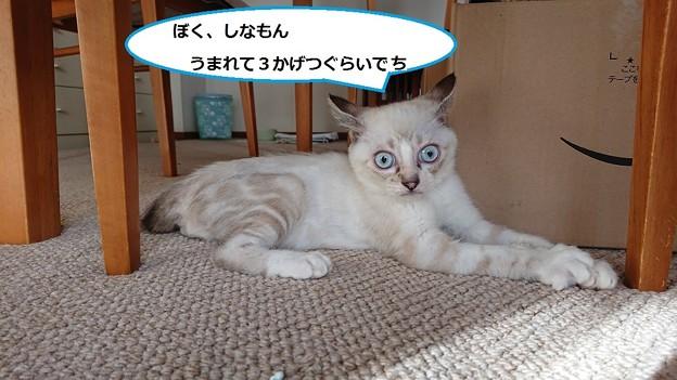 写真: シナモン1