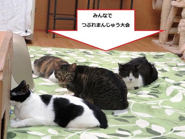 写真: ホカペ最高!