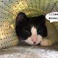 Photos: あきひめ