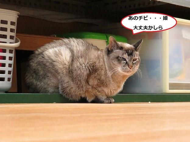 写真: まる姫が出てきた!4