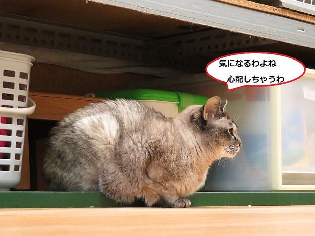 写真: まる姫が出てきた!5