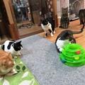 写真: おもちゃ独り占め!