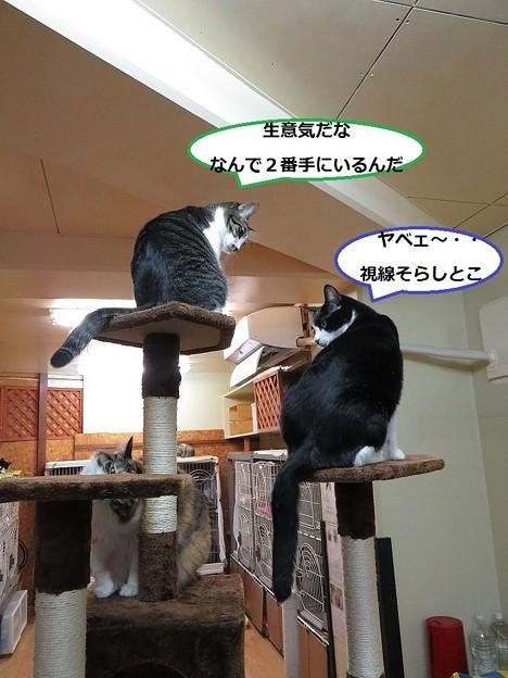 写真: キャットタワーだ!