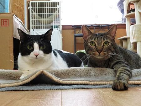 あきひめ&おおきみ「今日は猫の日なんだって」