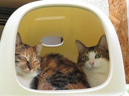 ナナ&アッサム「毎日が猫の日であってほしい」