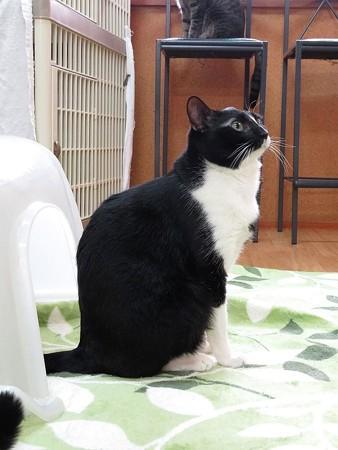 らいこう「素敵な猫背だろ!?」