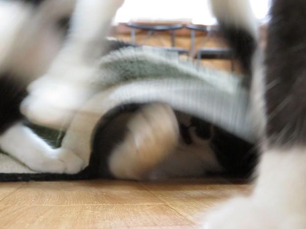 Photos: 駿河「と、思ったらキタっ!」