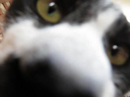 太雅「あ、防犯カメラ?」