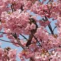 桜&日日日日
