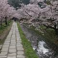 大文字山と桜