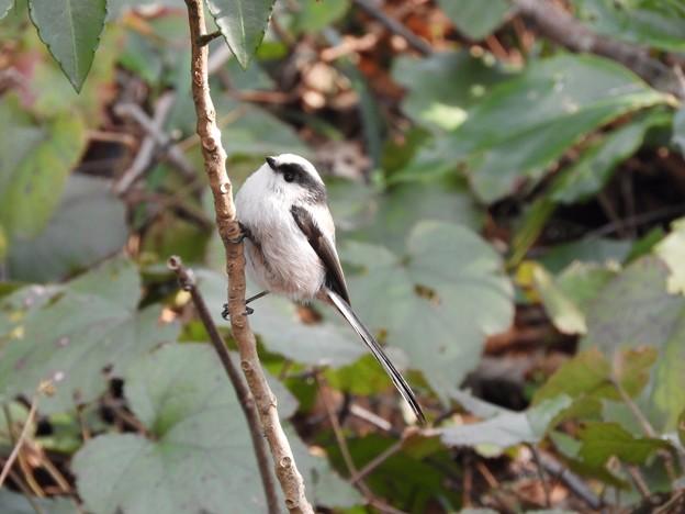写真: 野鳥 52