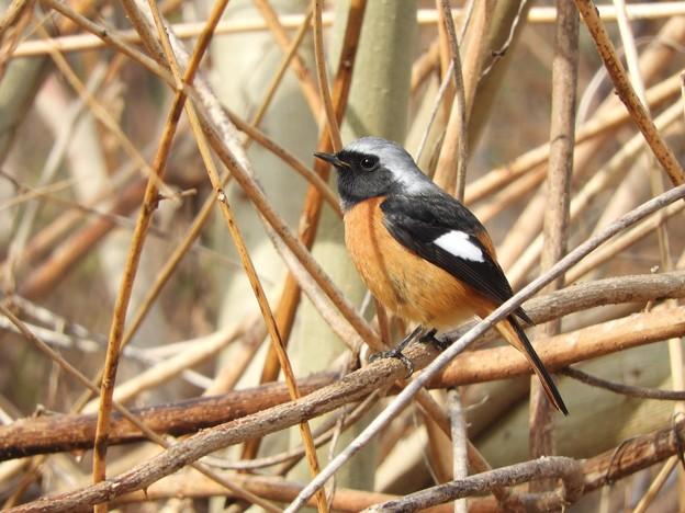 写真: 野鳥 53