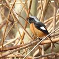 Photos: 野鳥 53