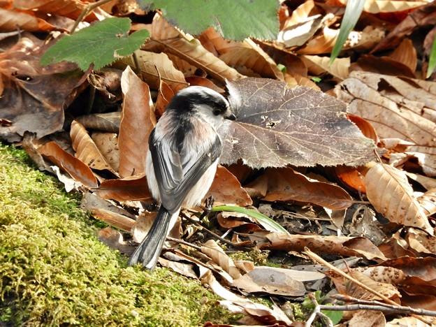 写真: 野鳥 56