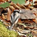 Photos: 野鳥 56