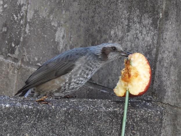 写真: 野鳥 59