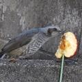 Photos: 野鳥 59