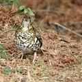写真: 野鳥 63