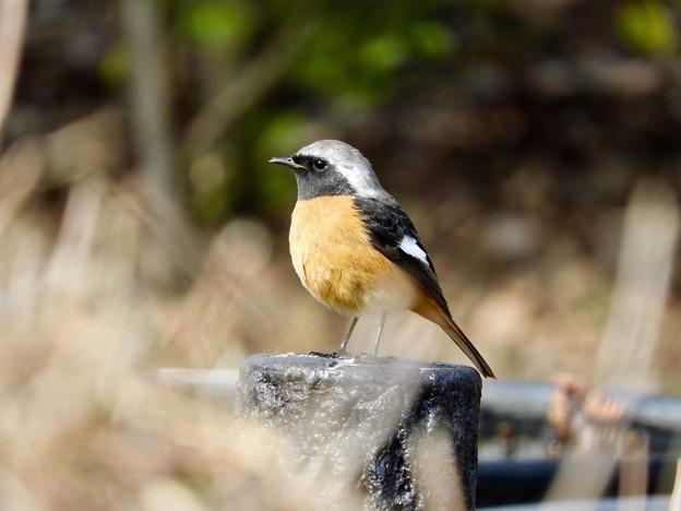 写真: 野鳥 65
