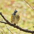 写真: 野鳥 68