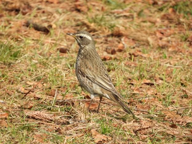 写真: 野鳥 69