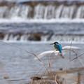 写真: 野鳥 70