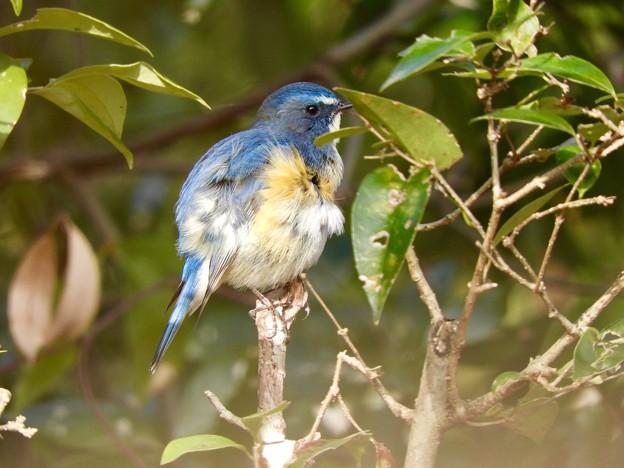 Photos: 野鳥 71