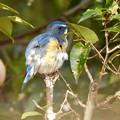 写真: 野鳥 71
