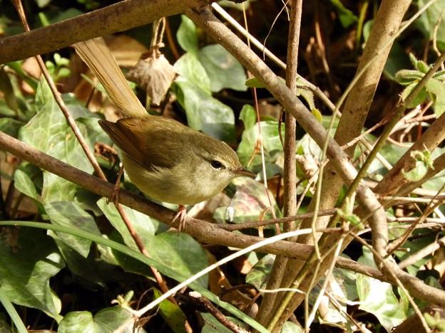 Photos: 野鳥 74