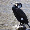 Photos: 野鳥 75