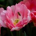 写真: 花から花へと~