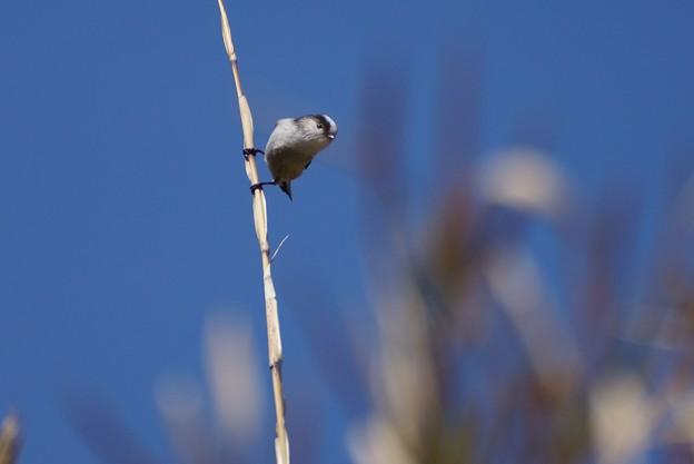 写真: 野鳥 77