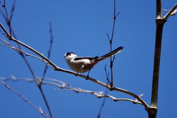写真: 野鳥 78