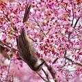 写真: 野鳥 79