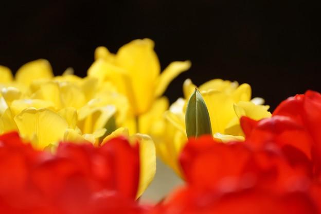 写真: Or yellow or red